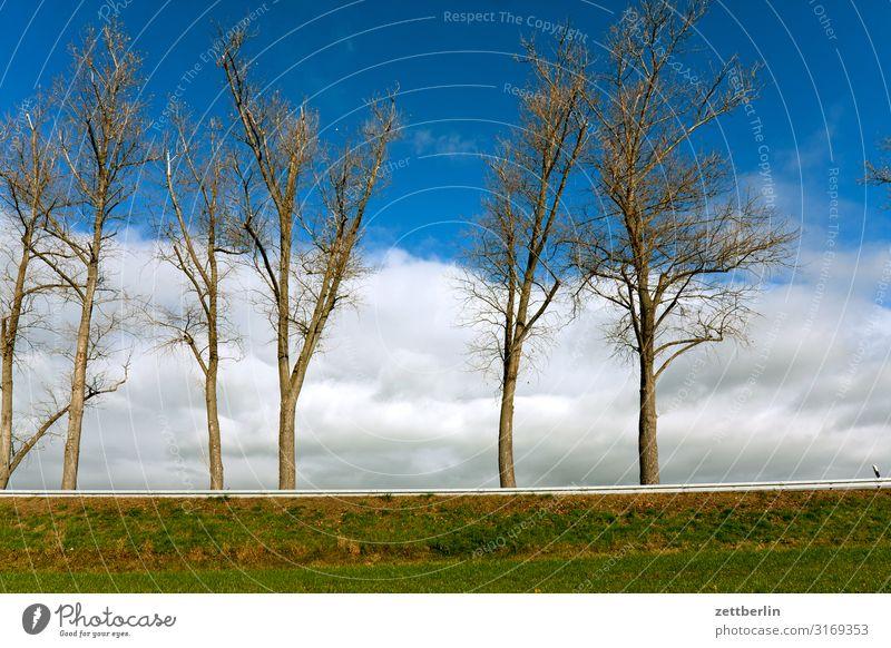 Bäume an der Landstraße Berge u. Gebirge Hügel Dorf Elbsandsteingebirge Erholung Ferien & Urlaub & Reisen Herbst Landschaft Laubwald Sächsische Schweiz Straße