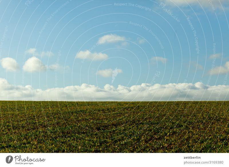 Horizont Hügel Dorf ländlich Elbsandsteingebirge Erholung Ferien & Urlaub & Reisen Herbst Landschaft Sächsische Schweiz wandern Feld Landwirtschaft Weide Ferne