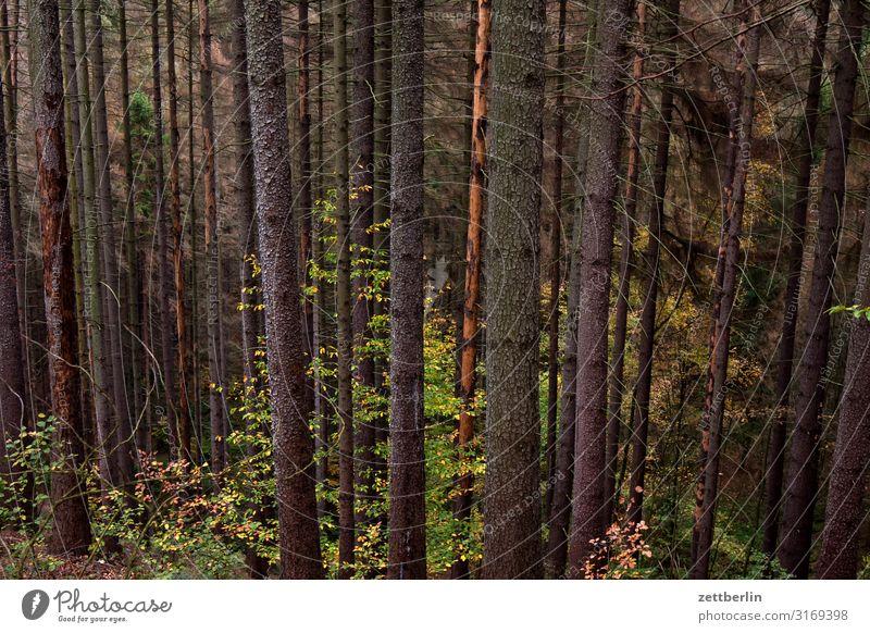 Bäume im Wald Berge u. Gebirge Dorf Elbsandsteingebirge Erholung Ferien & Urlaub & Reisen Herbst Hügel Landschaft Laubwald Nadelwald Mischwald