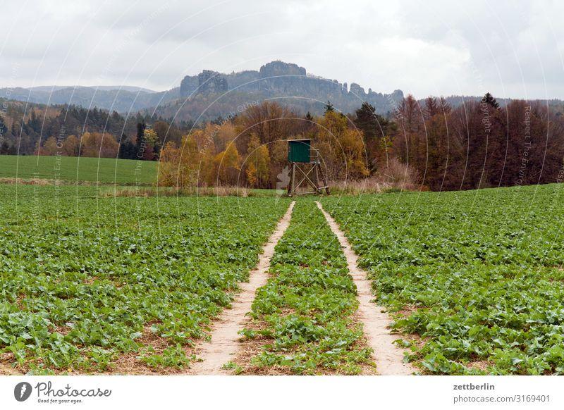 Schrammsteine mit Landwirtschaft berg dorf elbsandsteingebirge erholung felsen ferien herbst hügel landschaft sächsische schweiz wald wandern wanderung acker