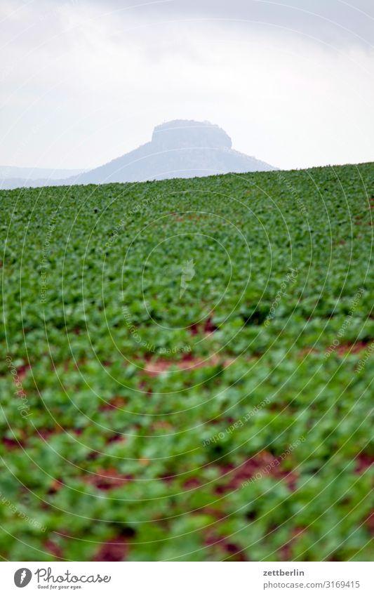 Lilienstein mit Salat berg dorf elbsandsteingebirge erholung felsen ferien herbst hügel landschaft laubwald sächsische schweiz wandern wanderung acker