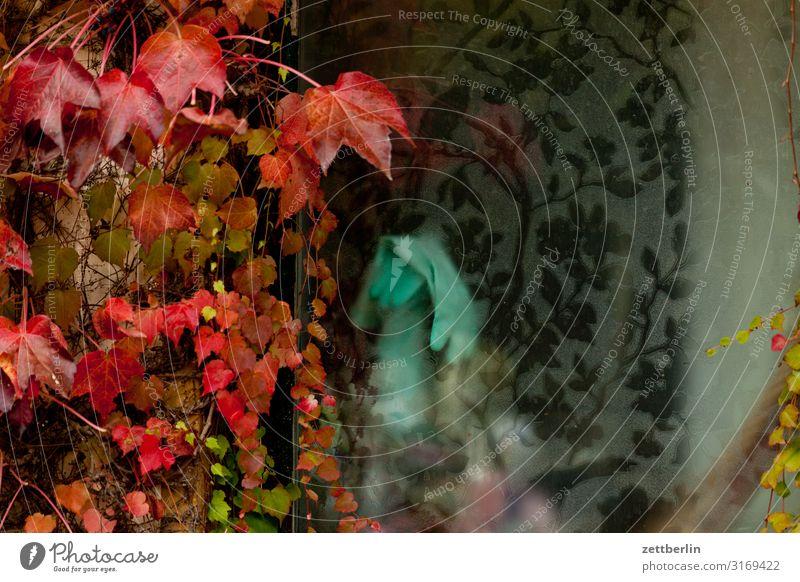Gummihandschuhe Haushalt Küche Fenster Gardine geheimnisvoll verborgen Wein Blatt Ranke Herbst Herbstlaub Lagerschuppen Kammer Sauberkeit Muster privat