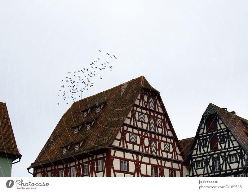 fliegender Verein über der Altstadt Fachwerkhaus Himmel Klima Franken Kleinstadt Fassade Vogel Schwarm authentisch historisch Stimmung Akzeptanz Bewegung Idylle