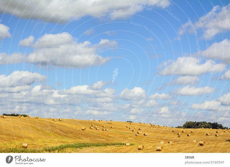 Bereich Umwelt Natur Landschaft Wiese natürlich landwirtschaftlich landwirtschaftliche Fläche landwirtschaftlicher Betrieb Agrarindustrie Ackerbau Ackerfläche