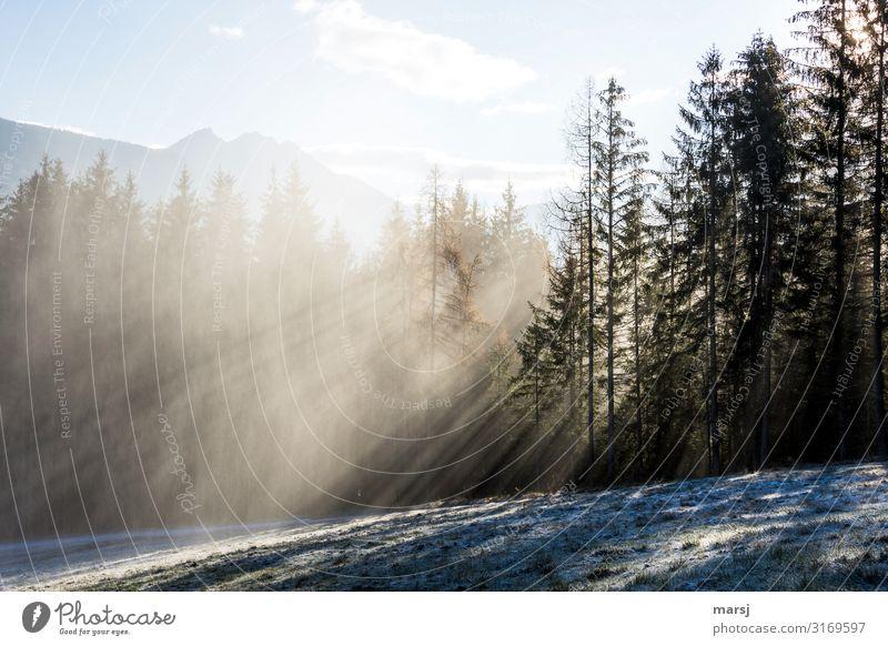 Ein kalter Tag Leben harmonisch Natur Landschaft Winter Schönes Wetter Nebel Eis Frost Wiese Wald außergewöhnlich Kraft Reinheit Hoffnung Einsamkeit rein