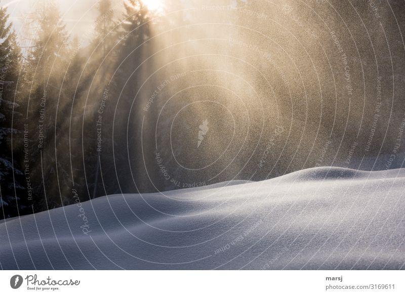 So sanft kann Winter ruhig Leben Schnee außergewöhnlich Schneefall Zufriedenheit Eis Frost harmonisch Meditation Schneelandschaft Winterurlaub