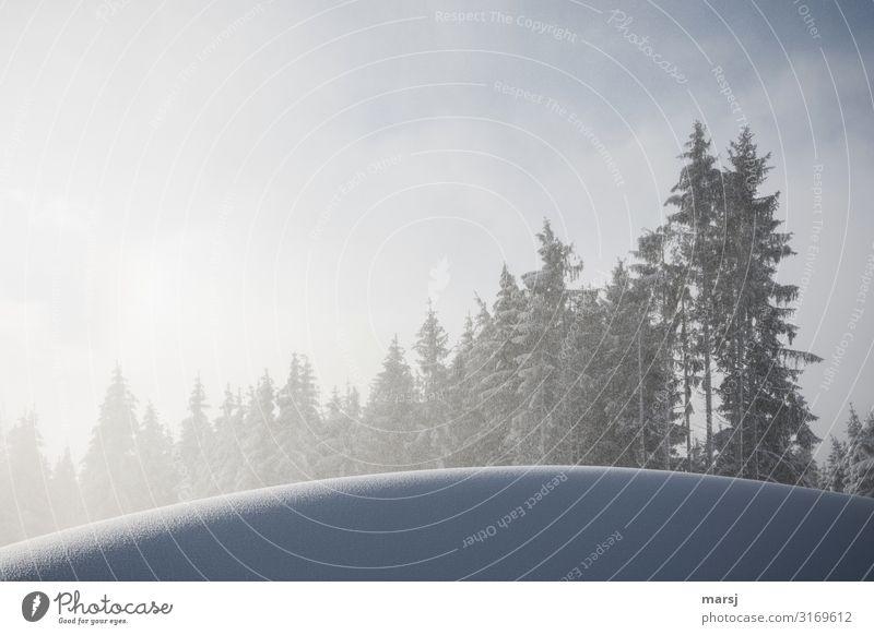 Ja, es schneit! Ferien & Urlaub & Reisen Natur Baum ruhig Wald Winter kalt Schnee Ausflug Schneefall Zufriedenheit Eis träumen Idylle Lebensfreude rund