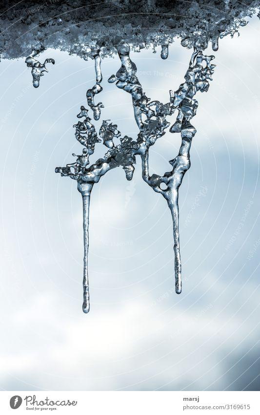 In der Schwebe Winter Eis Frost Eisskulptur Eiszapfen hängen elegant Zusammensein gigantisch einzigartig kalt Netzwerk Politik & Staat Skulptur gefroren