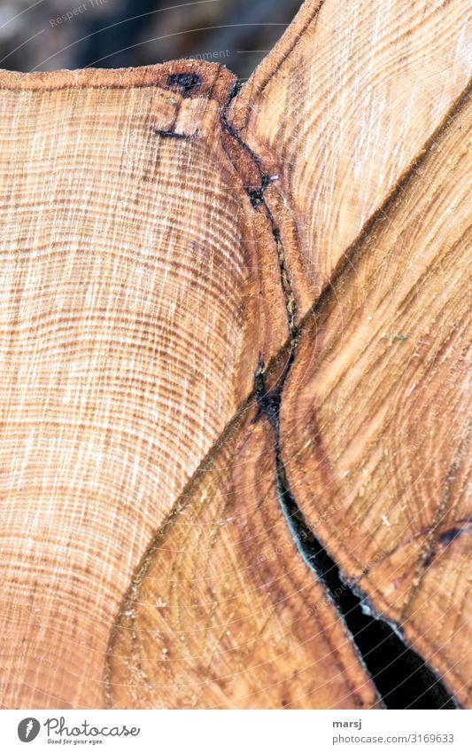 Verbundenheit Leben harmonisch Jahresringe Sägeschnitt gesägt Holz Zusammensein braun Warmherzigkeit Sympathie Ende einzigartig Beührungspunkt zusammenwachsen
