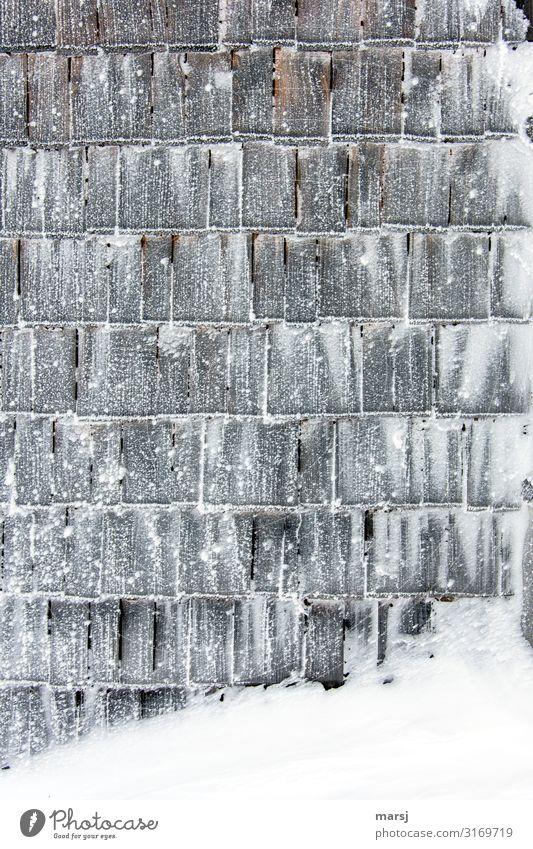 Angezuckerte Schindeln Winter dunkel Holz Wand kalt Schnee Mauer außergewöhnlich Zusammensein Eis einzigartig Schutz Frost gefroren eckig Holzwand