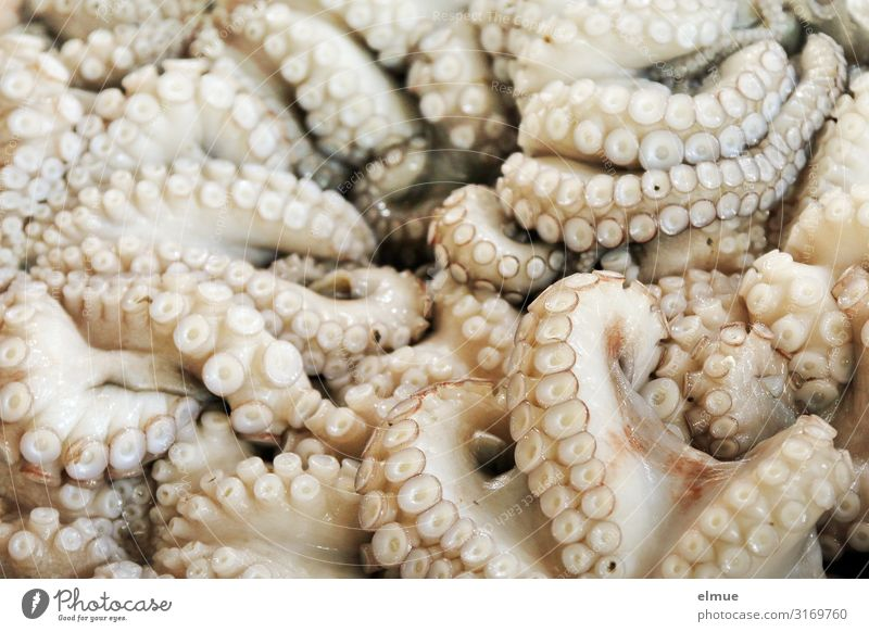 man nehme ... Lebensmittel Fisch Meeresfrüchte kaufen Handel Fischereiwirtschaft Angebot fangfrisch Totes Tier calamari Kraken Octopus Tintenfisch Meerestier