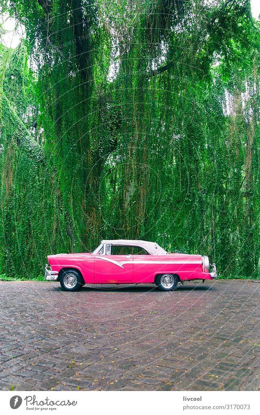 Rosa Almendron in einem Park , Havanna - Kuba Lifestyle Leben Ferien & Urlaub & Reisen Tourismus Ausflug Insel Garten Natur Landschaft Pflanze Baum Verkehr
