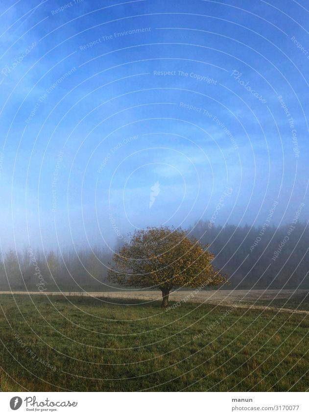 benebelt Himmel Natur Baum Erholung Einsamkeit Herbst Umwelt natürlich Wiese Nebel Wetter Wachstum Idylle authentisch Schönes Wetter Zukunft