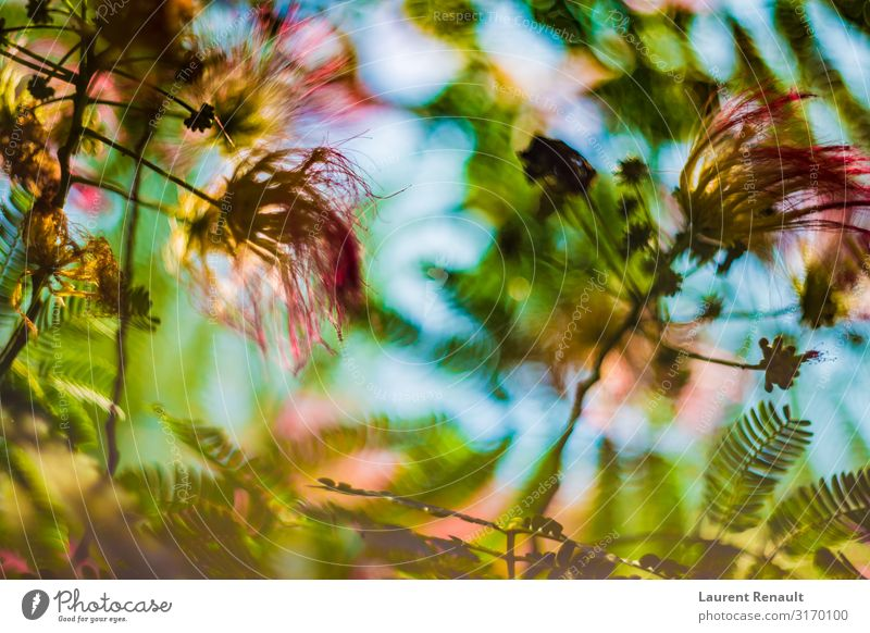 Natur Baum Blume Blatt natürlich Garten rosa exotisch Botanik geblümt Seide