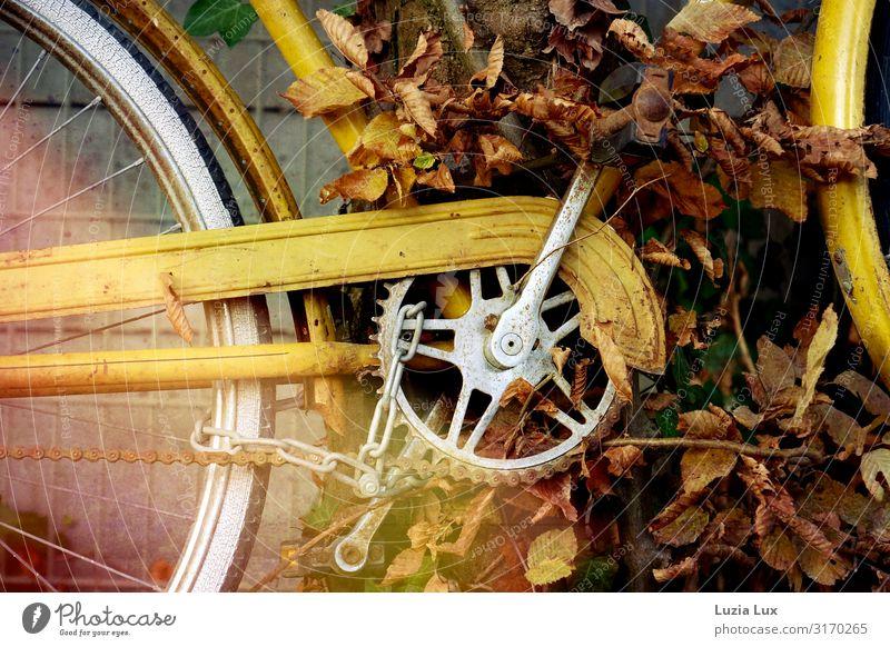 Fahrrad, herbstlich Rost gelb Zeit Vergänglichkeit Herbst Herbstlaub Herbstlicht Gedeckte Farben Außenaufnahme Textfreiraum oben Textfreiraum unten Tag