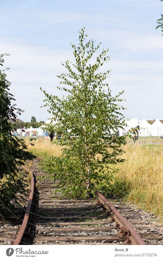 Abstellbaum Umwelt Landschaft Pflanze Urelemente Erde Himmel Sommer Baum Sträucher verwildert Sehenswürdigkeit Denkmal Verkehr Verkehrswege