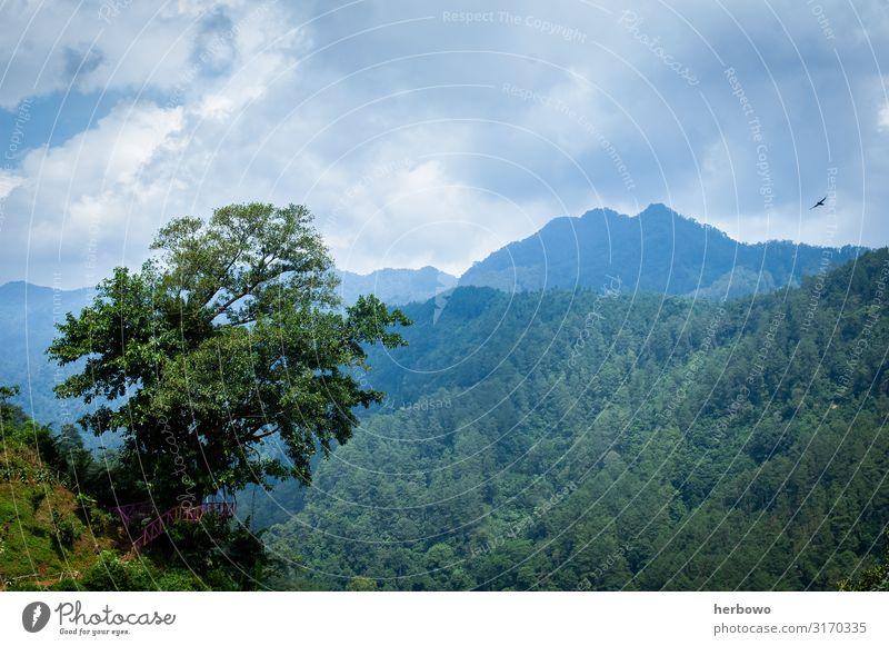 Regenwald Umwelt Natur Landschaft Sommer Schönes Wetter Baum Wildpflanze Wald Urwald Berge u. Gebirge natürlich schön blau gelb grün Farbfoto Außenaufnahme