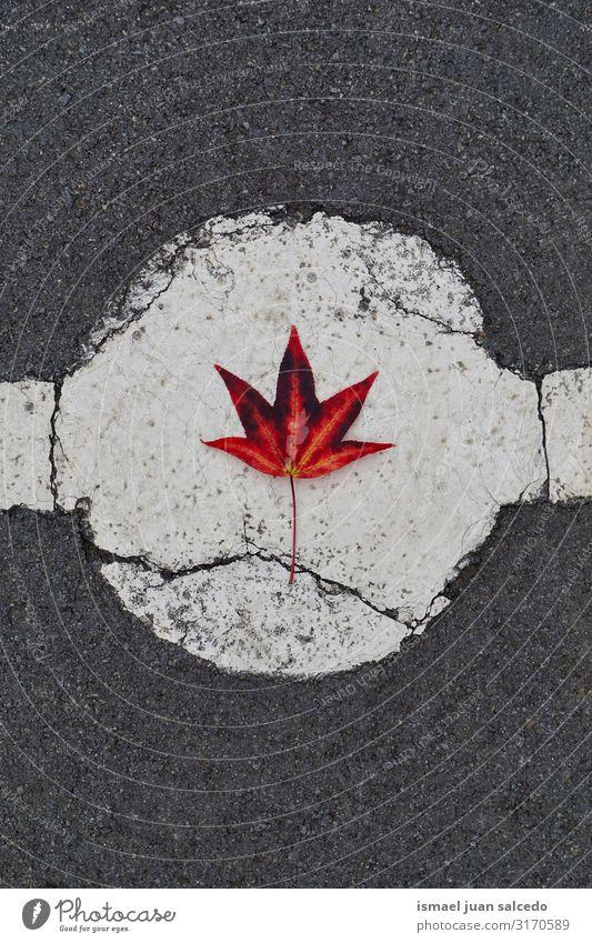 Natur rot Einsamkeit Blatt Herbst natürlich Boden Jahreszeiten fallen Isoliert (Position) Konsistenz zerbrechlich