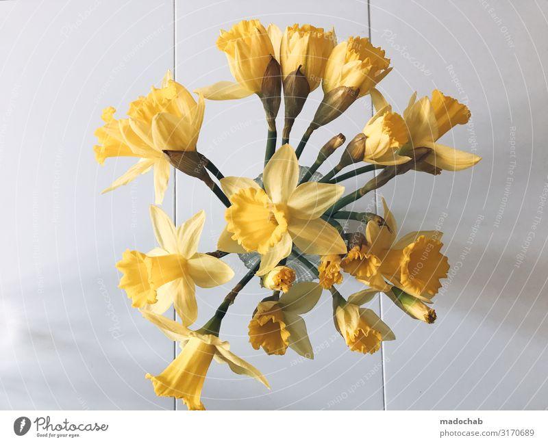 Blumenstrauß Feste & Feiern Valentinstag Muttertag Geburtstag Dekoration & Verzierung Kitsch Krimskrams Gefühle Stimmung Freude Glück Sympathie Freundschaft