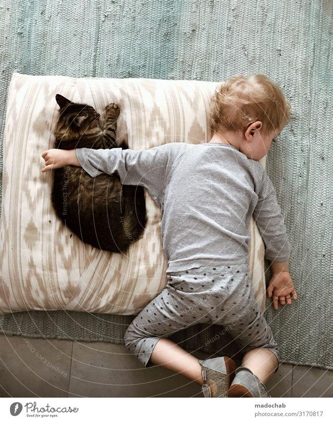Freundschaft - Kind umarmt Katze beim Schlafen Tierschutz Lifestyle Häusliches Leben Wohnung Kleinkind Junge Kindheit Gefühle Glück Zufriedenheit Lebensfreude