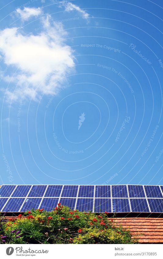 weitsichtig l Solarenergie Umwelt Häusliches Leben Zukunft Klima Wandel & Veränderung Netzwerk Umweltschutz nachhaltig Sonnenenergie Solarzelle Klimawandel