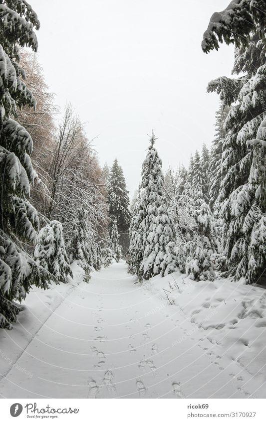 Winter mit Schnee im Thüringer Wald bei Oberhof Ferien & Urlaub & Reisen Winterurlaub Berge u. Gebirge wandern Wintersport Natur Landschaft Baum Wege & Pfade