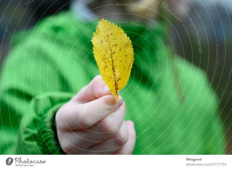 Herbst Kindererziehung Kindergarten Schulkind Mensch Kleinkind Mädchen Kindheit 3-8 Jahre streichen gelb grün Neugier Herbstlaub Suche Blatt Vergänglichkeit