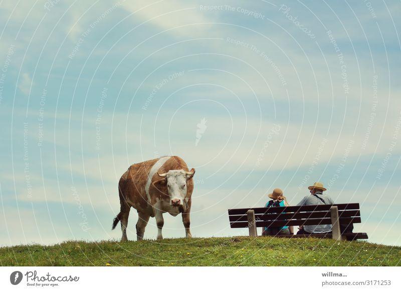 Kuh auf der Alm neben einer Bank, auf der ein Pärchen sitzt - besetzt, Frechheit! Alpenkuh Braunvieh Blick in die Kamera lustig Neugier Paar Ehepaar Mann Frau
