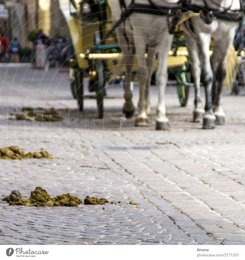 verloren | Äpfel Ausflug Sightseeing Städtereise Salzburg Straße Kopfsteinpflaster Pferdekutsche Fiaker Huf 2 Tier Pferdeapfel Kot Ausscheidungen Scheiß