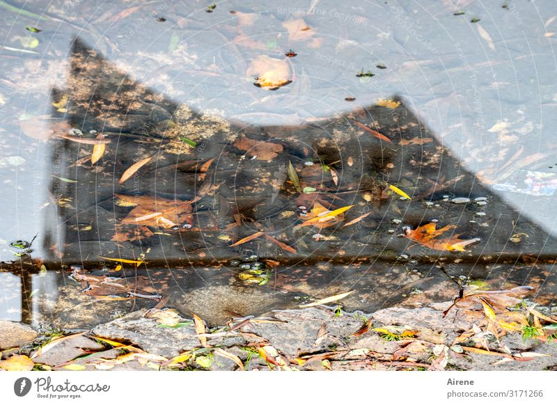 Singin' in the Rain | UT Hamburg Urelemente Wasser Herbst Wetter Regen Blatt Herbstlaub Hamburger Hafen Hafenstadt Sehenswürdigkeit Elbphilharmonie Straße