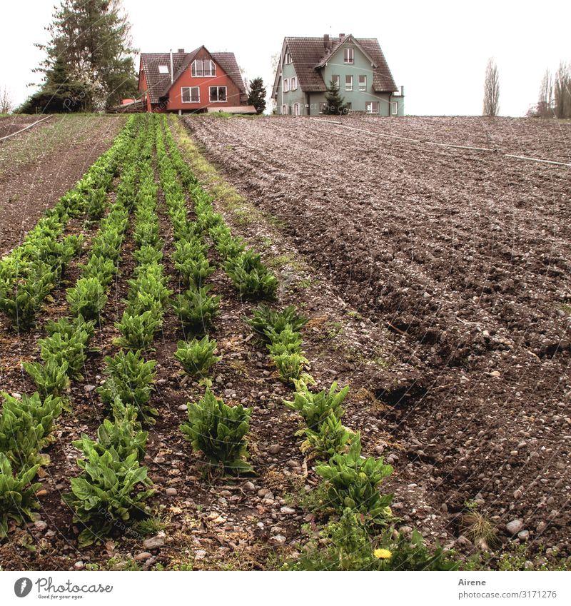 Eigenbedarf | AST 7 Bodensee Gemüse Salat Salatbeilage Landwirtschaft Forstwirtschaft Gemüsebau Ackerbau schlechtes Wetter Grünpflanze Nutzpflanze Feld