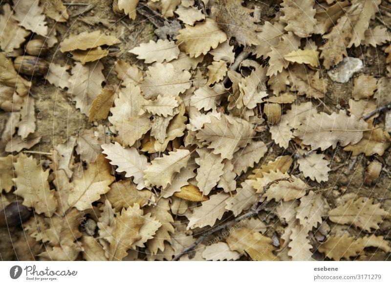 Gelbe Blätter im Herbst Design schön Sonne Winter Dekoration & Verzierung Tapete Halloween Natur Landschaft Pflanze Baum Blatt Park Wald alt hell natürlich