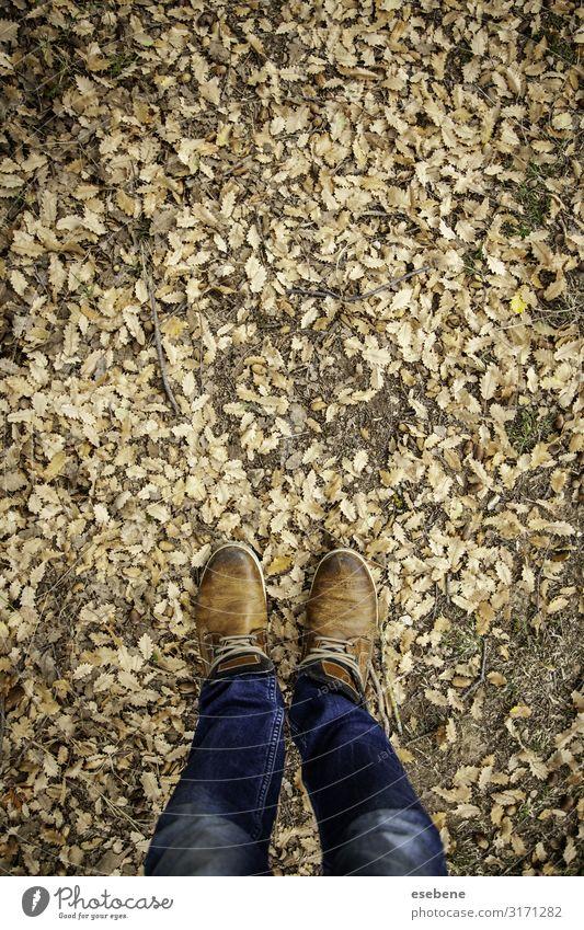 Füße in abgefallenen Blättern Lifestyle Stil wandern Mensch Frau Erwachsene Mann Fuß Natur Herbst Blatt Park Wald Mode Jeanshose Schuhe Stiefel Turnschuh