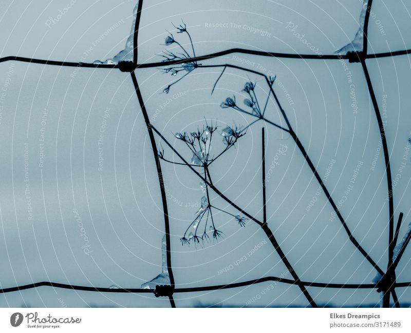 Eisige Schönheiten Natur Pflanze Winter Frost Blume eckig glänzend kalt nah natürlich stachelig Symmetrie Farbfoto Gedeckte Farben Außenaufnahme Detailaufnahme