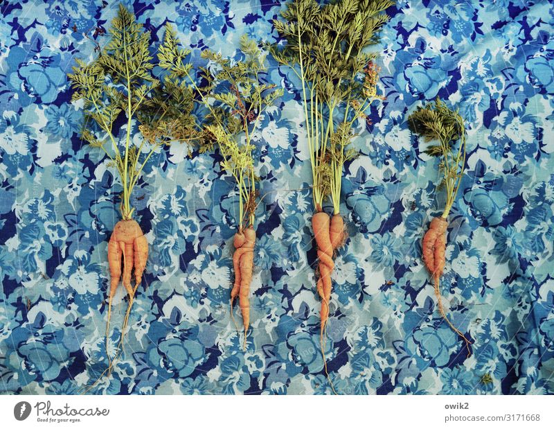 Individualisten Nutzpflanze Gemüse Möhre 4 Garten liegen frisch Gesundheit blau grün orange türkis Zusammensein einzigartig knackig Vitamin lecker Ernte