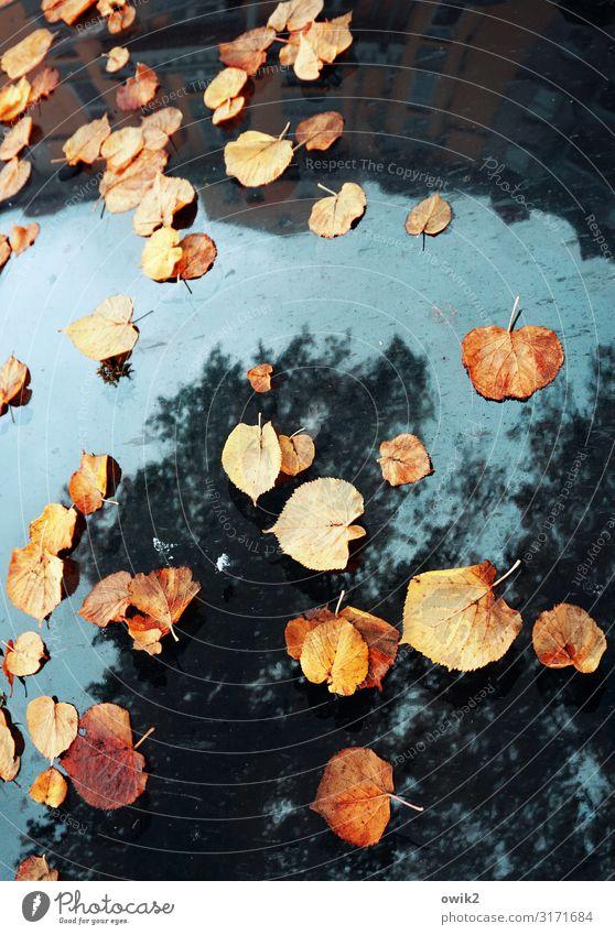 Herbstmeeting Pflanze Himmel Schönes Wetter Baum Haus PKW Motorhaube Spiegel Spiegelbild Zusammensein unten blau mehrfarbig orange rot Vergänglichkeit