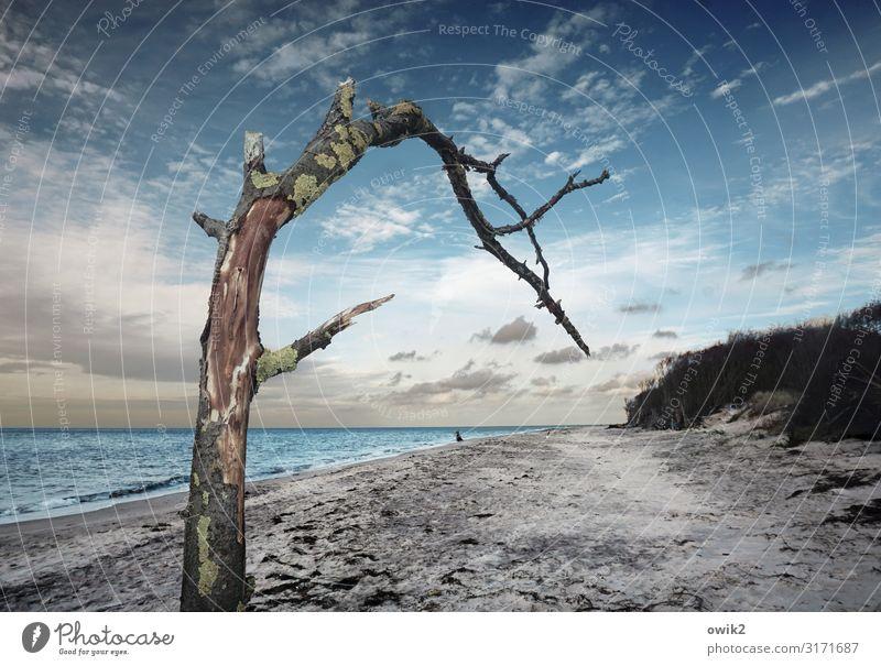 Grüßaugust Ausflug Ferne Freiheit Umwelt Natur Landschaft Pflanze Urelemente Sand Luft Wasser Himmel Wolken Horizont Herbst Schönes Wetter Wind Baum Ast Küste
