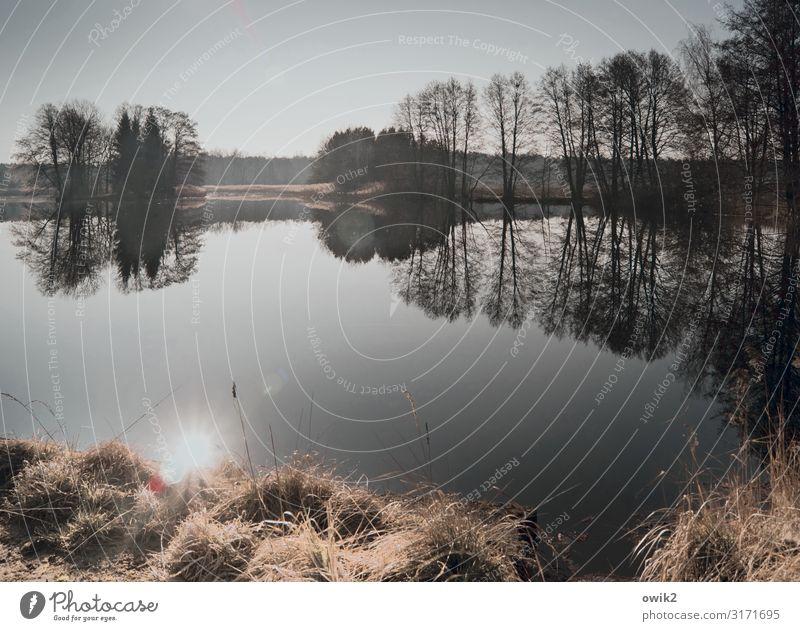 Nicht bewegen Umwelt Natur Landschaft Pflanze Himmel Horizont Sonne Herbst Schönes Wetter Baum Gras Sträucher Seeufer Insel Teich ruhig Idylle Ferne Windstille