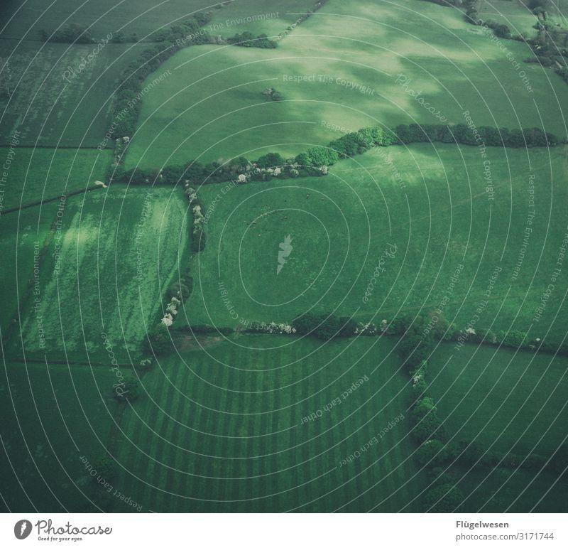 Feld & Wiesen Luftaufnahme Drohne grün Flugzeug fliegen Luftverkehr Aussicht Landschaft Landwirt Bauernhof Wald