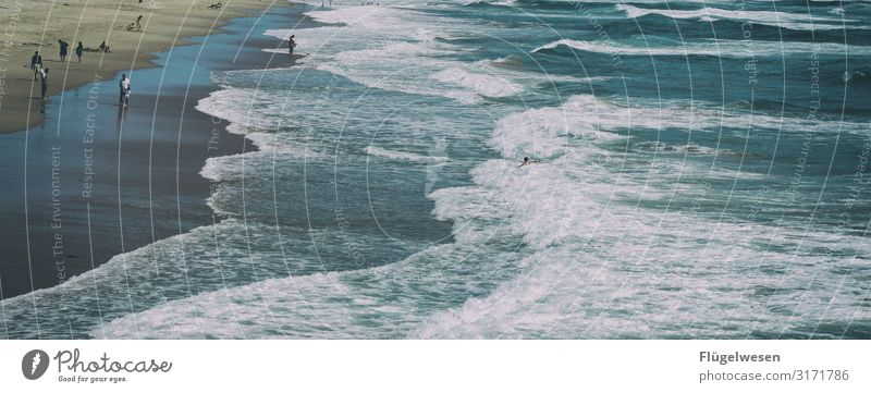 Mehr Meer Strand Malibu Santa Monica USA Amerika LA Los Angeles Palme Himmel Sommer Ferien & Urlaub & Reisen Sonne Sonnenbad Schwimmen & Baden Atlantik Pazifik