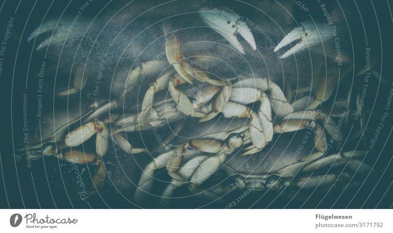 Krosse Krabbe Krebstier Muschel Schalenweichtier Fisch Sealife Schere gepanzert Wasser Essen zubereiten kochen & garen Fischgeschäft Fischer Angler Angeln