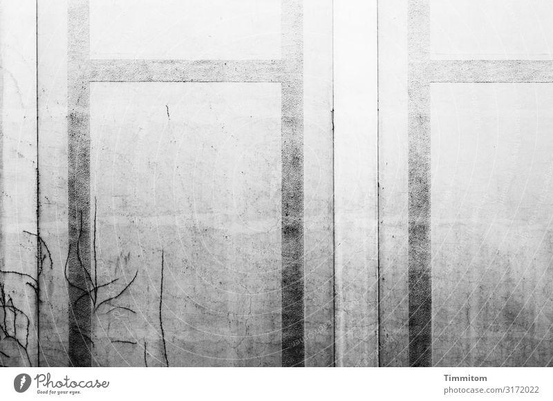 Fassade, grau Häusliches Leben Haus Innenhof Linie alt ästhetisch kaputt schwarz weiß Gefühle Vergangenheit Efeuspuren Schwarzweißfoto Außenaufnahme