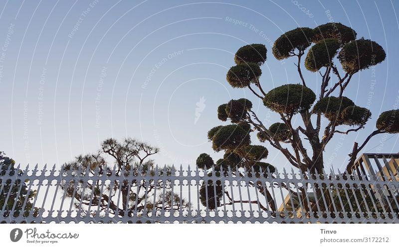 trees and fences Wolkenloser Himmel Schönes Wetter Baum Spitze Zaun Nostalgie Wuchsform Zypresse Formschnitt Strukturen & Formen eingezäunt gebändigt Garten
