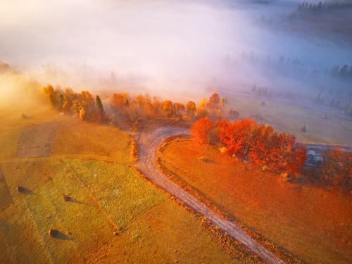 Luftaufnahme von Herbstwald und Nebel. schön Ferien & Urlaub & Reisen Berge u. Gebirge Umwelt Natur Landschaft Wetter Baum Gras Blatt Park Wald Hügel Straße