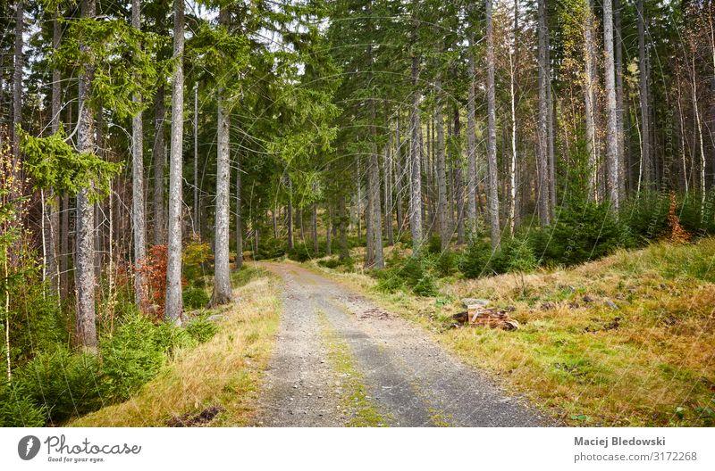 Pfad im Bergwald Tourismus Ausflug Expedition Berge u. Gebirge wandern Umwelt Natur Landschaft Pflanze Herbst Baum Blatt Park Wald Straße Wege & Pfade grün
