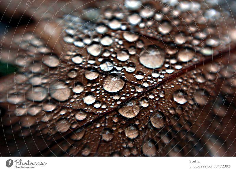 Herbsttropfen Umwelt Natur Wassertropfen Klima Wetter schlechtes Wetter Regen Pflanze Blatt Herbstlaub Blattadern Eichenblatt Wald Waldboden nass natürlich