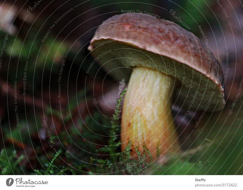 Lebewesen Umwelt Natur Herbst Wald Waldboden Herbstwald Wachstum authentisch nah natürlich schön braun grün achtsam Herbstgefühle Waldstimmung Pilz Pilzhut