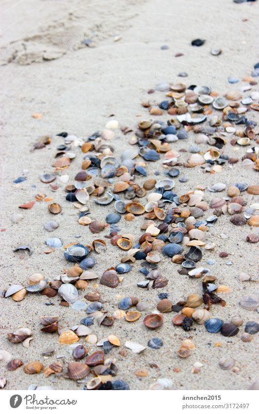Muschelweg Meer Strand Niederlande Ferien & Urlaub & Reisen Erholung Natur Sand Außenaufnahme Luft Pause Meditation weiß blau schwarz braun hell ansammeln