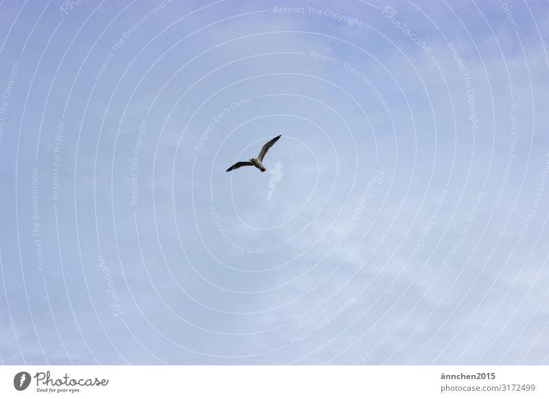 Hoch am Himmel Natur blau weiß Meer Erholung Wolken Freiheit Vogel fliegen Flügel beobachten Möwe
