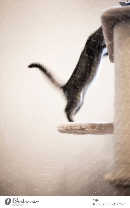 Gegenangriff Haustier Schwanz 2 Tier Tierjunges kämpfen Spielen authentisch Gefühle Bewegung strecken aufwärts springen spielerisch Farbfoto Gedeckte Farben